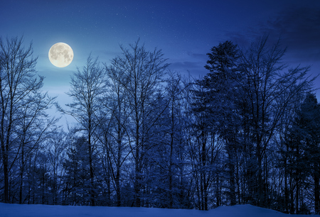 forest on snowy hillside at night in full moon light. beautiful nature background Standard-Bild