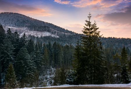 Forested mountain at winter sunset. Beautiful nature scenery