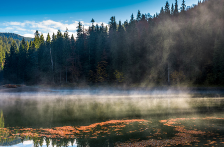 spruce forest on the bank of boiling lake at sunrise in autumn