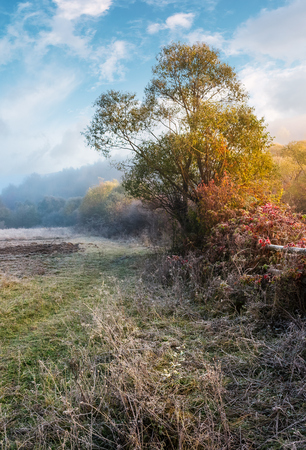 plants and trees on frosty autumn morning. lovely rural scenery with cold fog in November