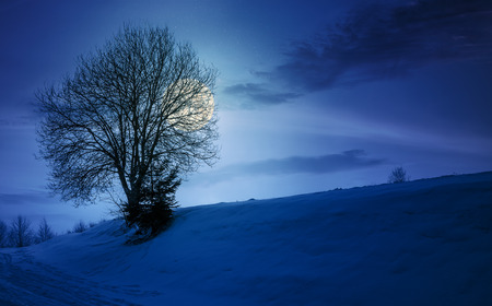 leafless tree on snowy slope at night in full moon light. lovely winter nature background