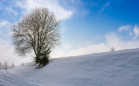 leafless tree on snowy slope. lovely winter nature background