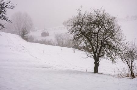 霧の中で農村雪に覆われた丘の中腹に裸の木。冬の暗い田舎の風景