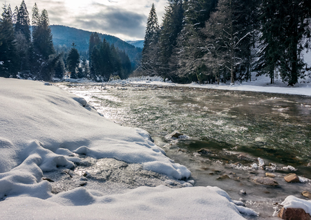cold flow of forest river in snowy spruce forest. ice and snow on the rocky shore. gorgeous winter scenery in mountainous area on a cloudy day.  Stock Photo