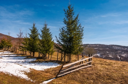 풍 화 잔디와 눈 언덕에 울타리 근처 가문비 나무 나무. 산의 아름다운 봄의 풍경