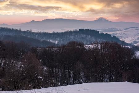 冬の夜明けに葉のない森林に覆われた丘。遠くに高い雪のピークと美しい山の尾根。Pikui 山の近くのカルパチア地域