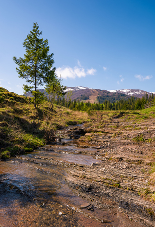 Carpathian alpine countryside in springtime. Spruce tree near the calm stream. forest at the foot of the mountain with snowy tops in the distance Stock Photo - 91013806