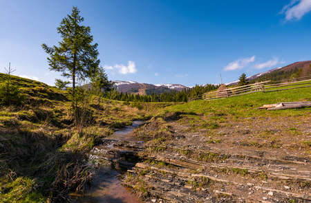 Carpathian alpine countryside in springtime. Spruce tree near the calm stream. forest at the foot of the mountain with snowy tops in the distance Stock Photo - 90846476