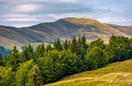 forested hillside of Svydovets mountain ridge. lovely summer landscape with gorgeous sky