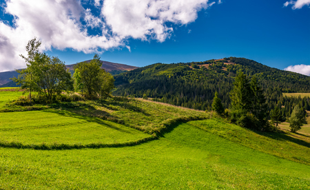 grassy field in mountainous rural area. beautiful countryside scenery with lovely sky on a summer day Stock Photo