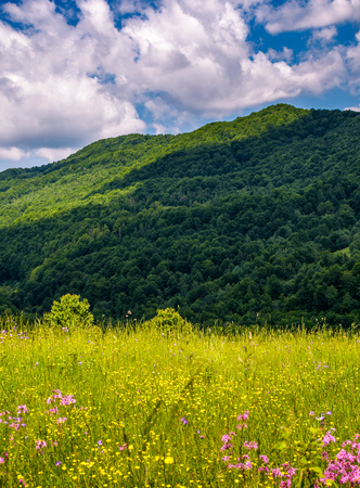 grassy pasture with wild flowers in mountains. beautiful summer scenery on a fine weather day Stock Photo