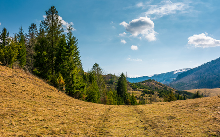 forested hills of Carpathians in springtime. poor scenery after winter storms Stock Photo