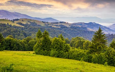 緑の牧草地、カルパティア山脈の森林。夏に紫日の出山の美しい風景