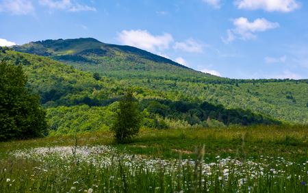 grasachtig gebied met madeliefjes op helling. prachtig zomerlandschap met hoge berg in de verte Stockfoto