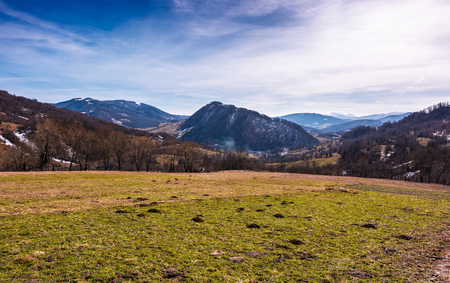 grassy field on an slope in springtime. lovely countryside landscape in Carpathian mountainous area Stock Photo