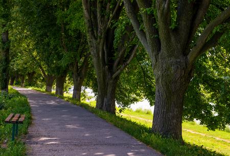 bench in shade of linden trees. Uzh river embankment in summer Stok Fotoğraf - 91334387