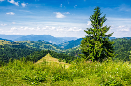 spruce tree on the edge of e hill. gorgeous summer landscape with mountain ridge in the distance Stock Photo