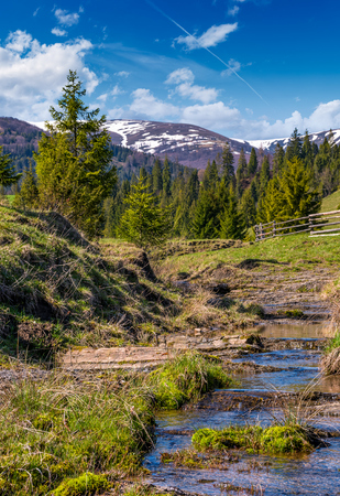 beautiful mountainous countryside in springtime. trees and wooden fence on hillside near the small brook. spruce forest at the foot of the mountain ridge with snowy tops Stock Photo