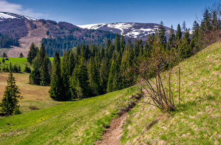 beautiful nature scenery in springtime. bush and a footpath on a grassy hillside. forest and mountain with snowy tops on the background Stock Photo - 91334394