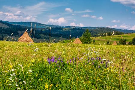 夏の田舎の農村フィールドに野生のハーブ。カルパティア山脈の美しい風景