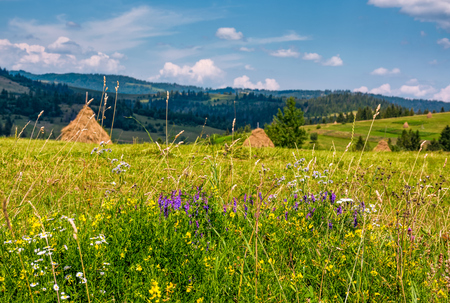 wild herbs on a rural field in summer countryside. lovely scenery in Carpathian mountains Stock Photo - 91334395