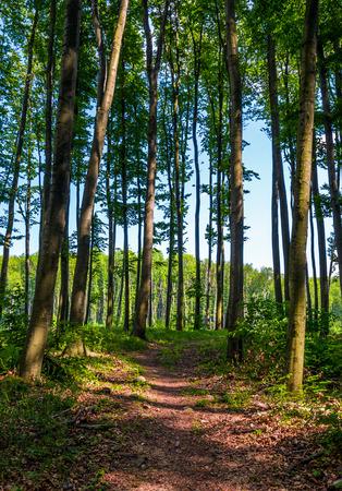높이 나무와 숲을 통해 경로입니다. 아름다운 여름 풍경