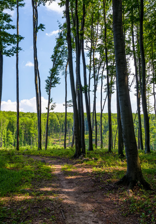 path through forest with tall trees. lovely summer scenery Reklamní fotografie