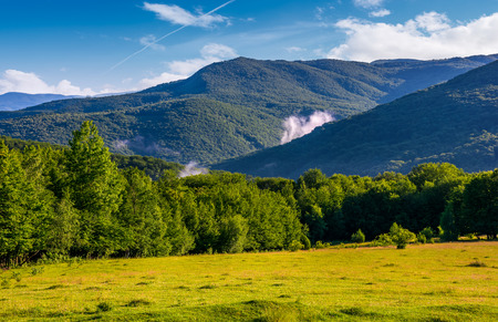 grassy field in front of a forested hills. lovely nature scenery in springtime mountains