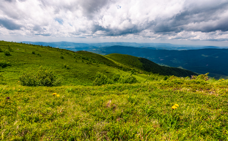grassy hills on a cloudy day in Carpathians. beautiful mountain landscape in summer