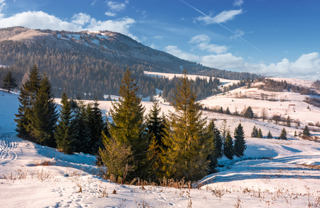 beautiful countryside with conifer forest. lovely landscape in mountains on a bright winter day