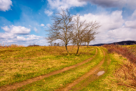 leafless trees along the dirt road up the hill. beautiful countryside springtime scenery in mountains on a sunny day with some clouds on a blue sky