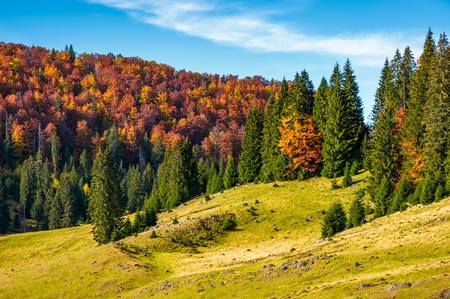 grassy hillside with mixed forest in autumn. picturesque nature scenery in Romanian mountains