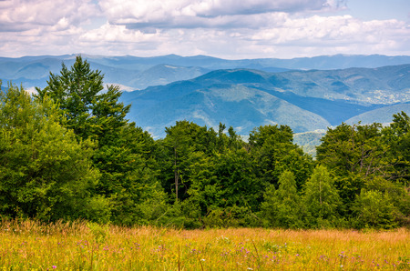 grassy meadow on a forested hillside. lovely nature scenery in Carpathian mountains