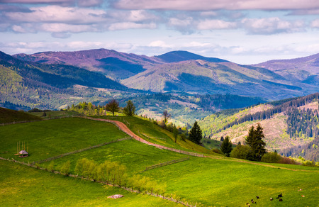 grassy rural fields in mountainous area. beautiful countryside landscape under the cloudy sky