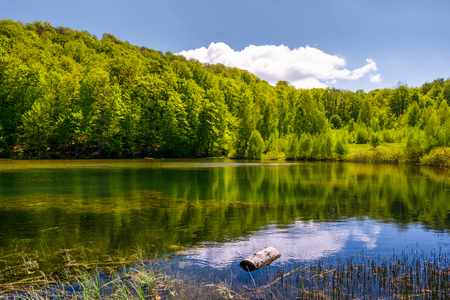 lovely pond in the forest on a hillside. serene day in springtime outdoors Stock Photo
