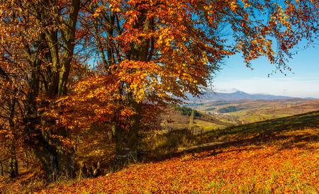 晴れた秋の日に距離の高峰とカルパティア山脈の中腹に赤い葉を持つ背の高い木の近くのベンチ 写真素材