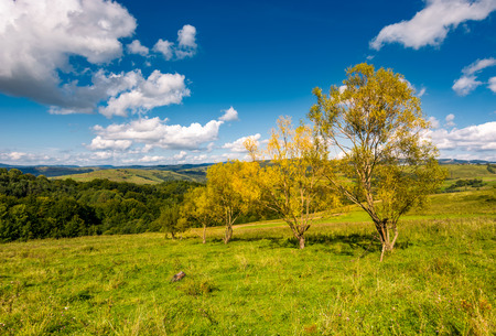 trees with yellow foliage on grassy slope. beautiful countryside landscape with gorgeous cloudscape in early autumn Stock Photo