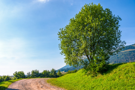 tree on grassy hillside by the road turnaround. lovely countryside forenoon scenery in mountains