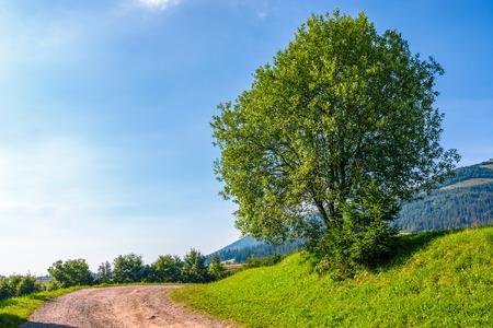albero sulla collina erbosa dal turnaround strada. bel paesaggio mattutino in montagna Archivio Fotografico