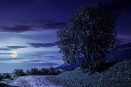 tree on grassy hillside by the road turnaround. lovely countryside scenery in mountains at night in fool moon light Stock Photo
