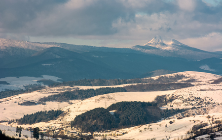 rural area in winter Carpathians. agricultural fields and spruce forests on snowy hillsides. huge mountain ridge with Pikui peak in the distance