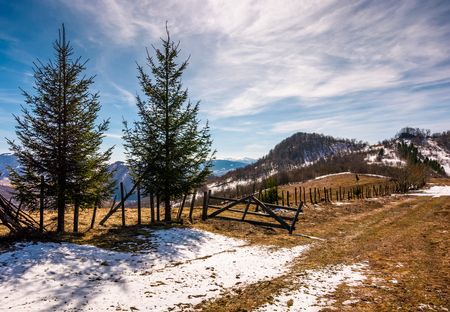 spruce trees near the fence on hillside with weathered grass and snow. lovely springtime scenery in mountains Banco de Imagens - 91899387