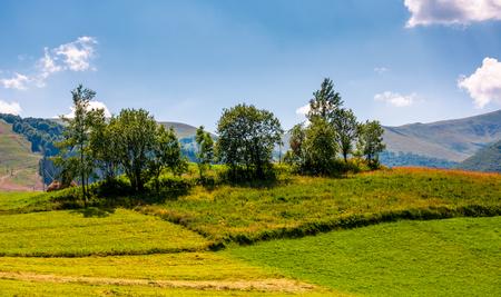잔디 농촌 필드에 작은 과수원. 산의 아름다운 여름 풍경