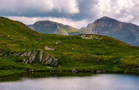 lake among the grassy slopes with boulders. summer travel concept. gorgeous high altitude landscape on a cloudy day. glacier Capra located in Southern Carpathian Fagaras Mountains of Romania