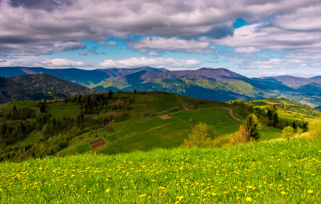 grassy rural fields on a cloudy day. lovely springtime countryside in Carpathian mountains