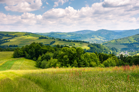 grassy fields in mountainous rural area. lovely rural landscape of Carpathian mountains in summer Stok Fotoğraf