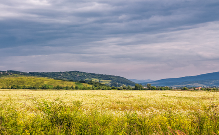 beautiful countryside landscape. rural field near the forest on a tranquil summer day. village on mountain ridge under cloudy blue sky