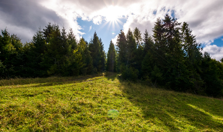 spruce forest on a grassy slope. beautiful nature scenery with bright sun on a cloudy day 版權商用圖片