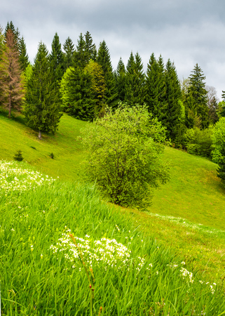 forest on grassy hillside in springtime. lovely nature background Stock Photo