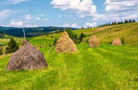 草原の上に一列に干し草が積み重なっている。夏の美しい田舎の風景。エコロジー農業の概念。 写真素材
